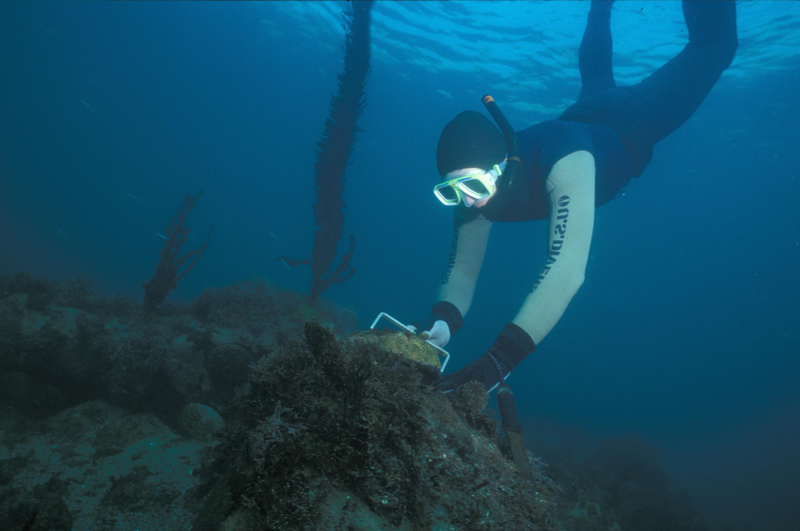 Scuba Diving West Palm Beach Delorean