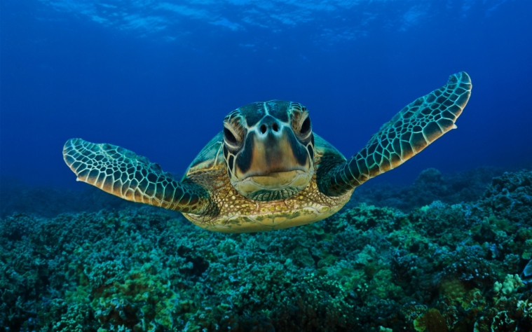sea-turtles-1