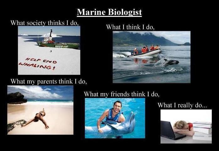 Illusions and reality: marine biology as a career.
