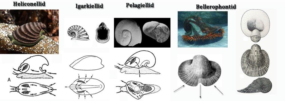 snails-flow