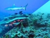 good-bad-reef