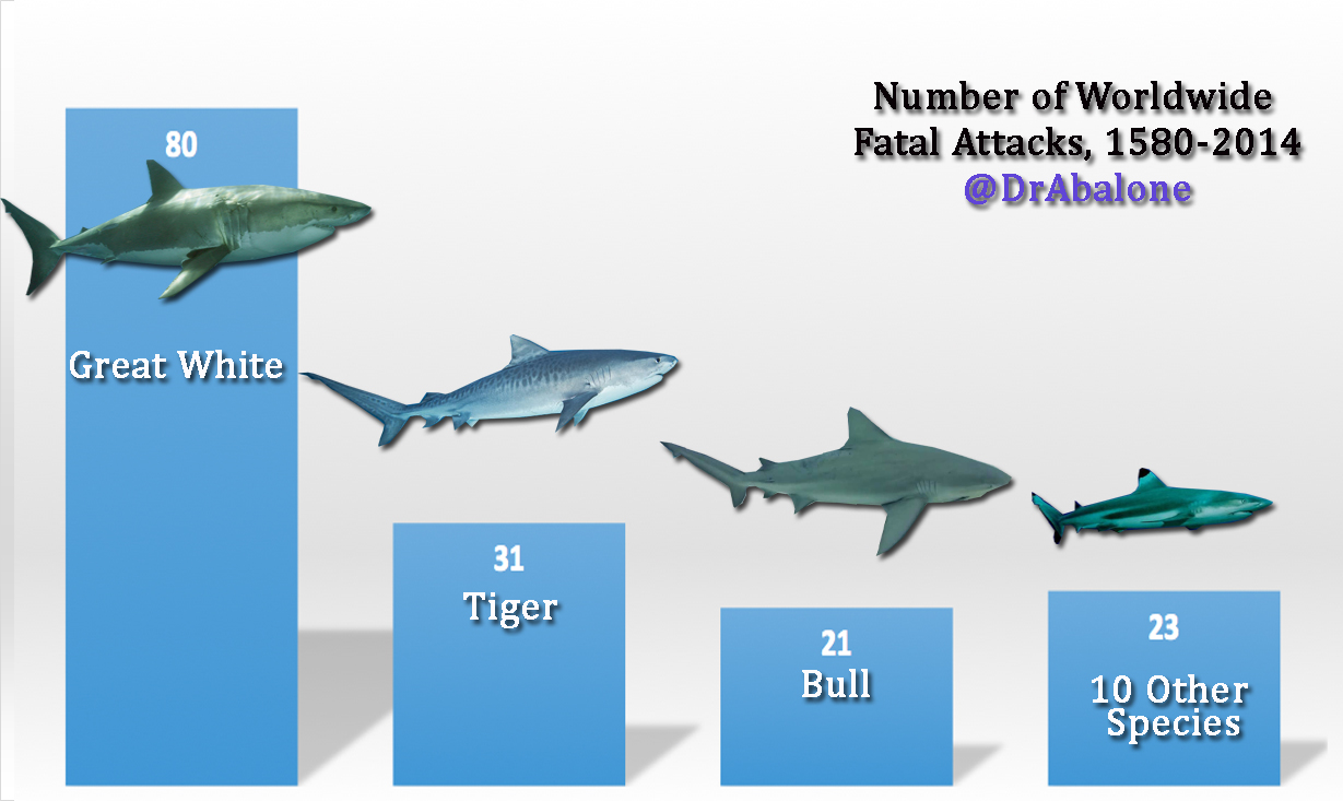 Shark attacks are on the rise: five things you need to know – Dr ... for Great White Shark Diagram  270bof