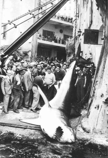 1954_CamogliMay
