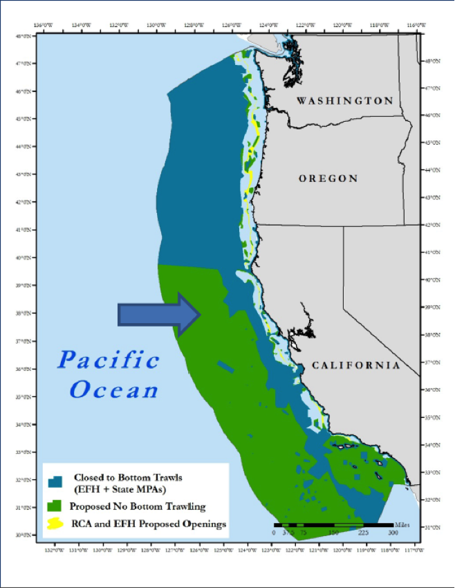 Protecting the deep sea conservation in action dr abalone for Deep sea fishing oregon coast