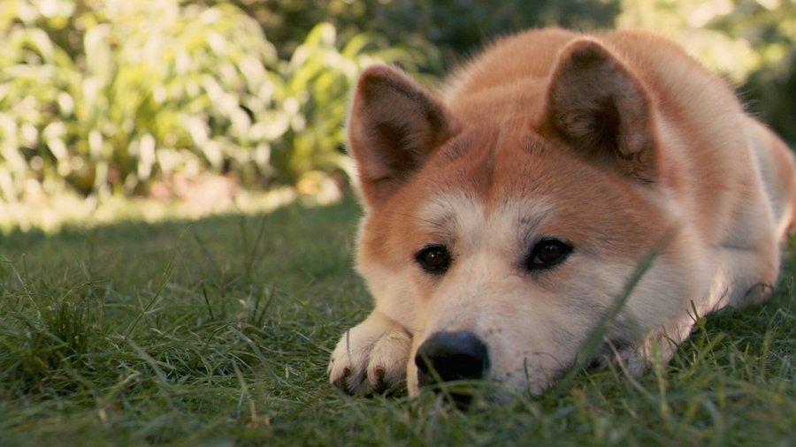 My Dogs Have Bad Breath Pumpkin Powder